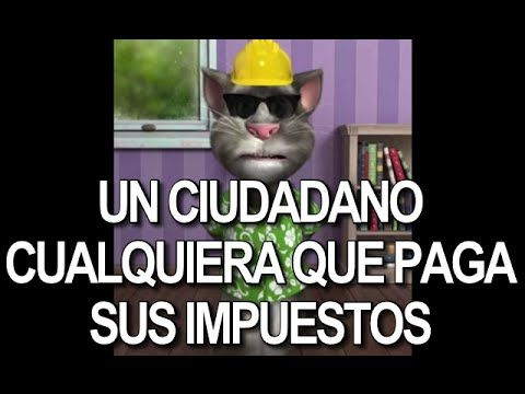 63 best El Gato Tom images on Pinterest  Google Watches and Youtube