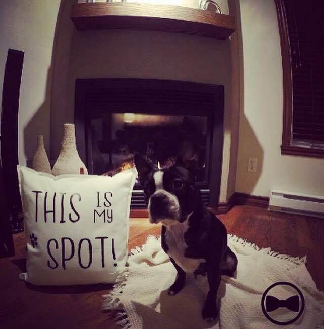 Pillow / Cushion This is my Spot! Great gift idea Dog Lover, Etsy, Animals, Vinyl, Heat Press, HTV