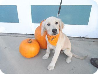 Adopt Dog Riverside Ca