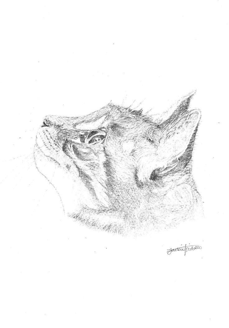 Cat print $25 Print, art, drawing www.petsbypencil.co.nz