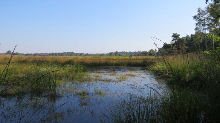 2015-09-23 Mooie ven op de Tongerense Heide