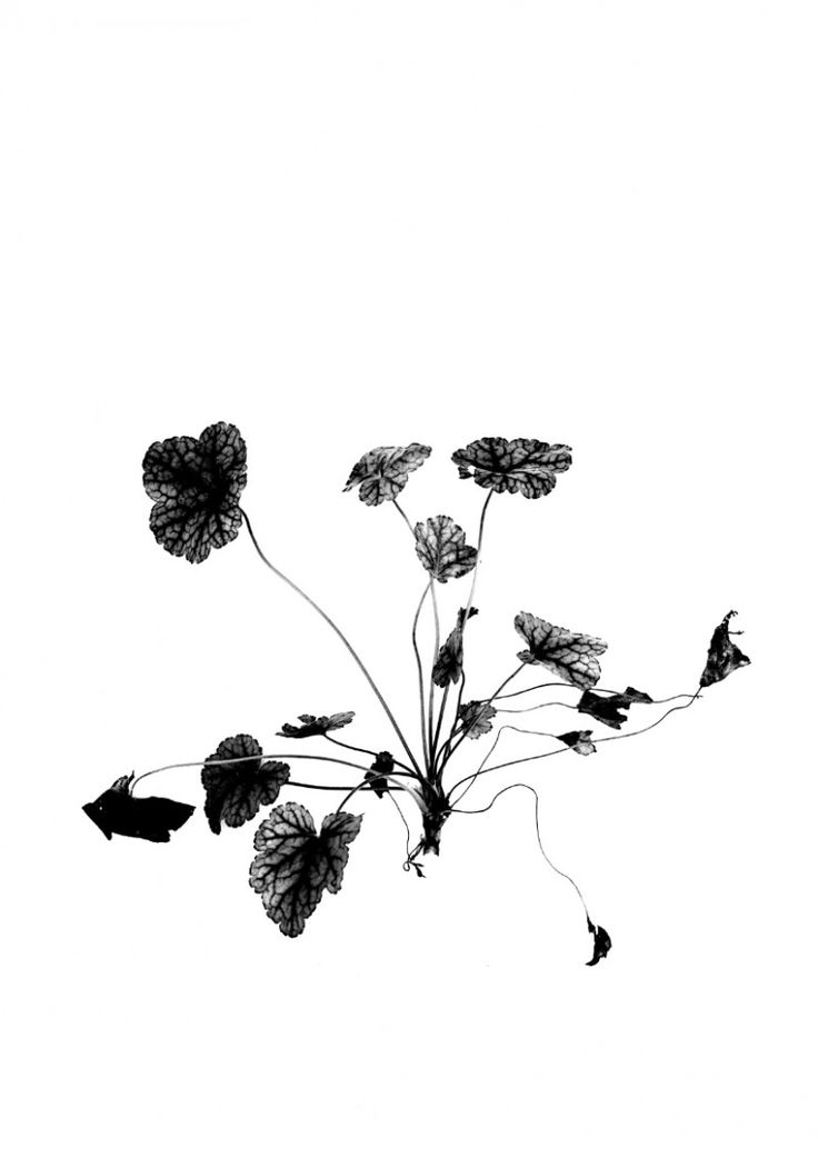 Print RK Design – September Flowers 04