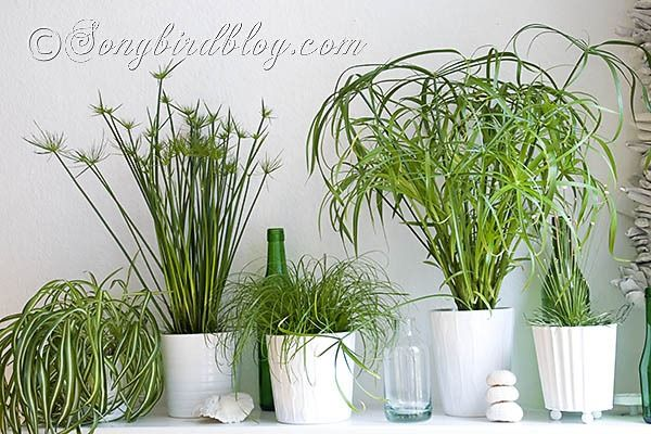 17 best images about indoor house plants on pinterest Easy small house plants