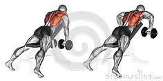 Exercising. incline bench two arm dumbbell row