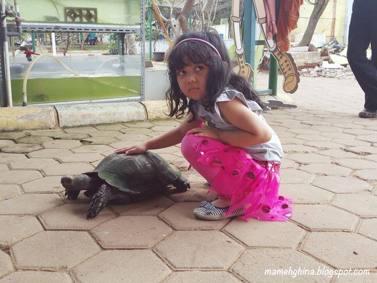 Mameh Ghina's Blog: BFC Mini Farm: Main Sambil Belajar Aneka Binatang
