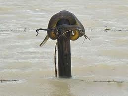 queensland floods - Google Search