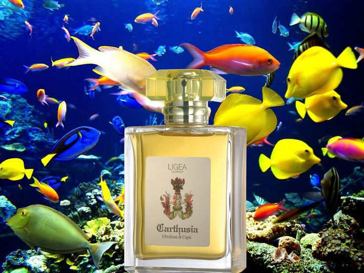 Ligea Carthusia I profumi di Capri Named after one of the three sirens who tried in vain to bewitch Ulysses, Ligea is a sensual, passionate, surprising, and powdery scent that combines the warmth of oppoponax with the taste of fresh, tender mandarin. — at Rosina Perfumery.