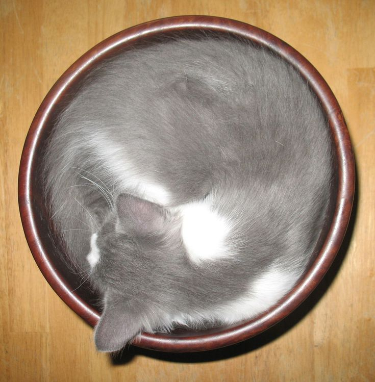 40 Funny Pictures Of Cats That Consider Themselves Liquid
