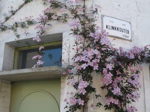 bloeiende clematis in een geveltuin