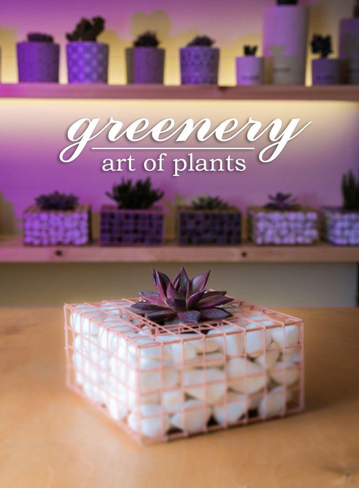 Gabion pot with echeveria! #greenery #greeneryartofplants #cactus #succulents #plants #gabion #gabioncreations #chania #crete
