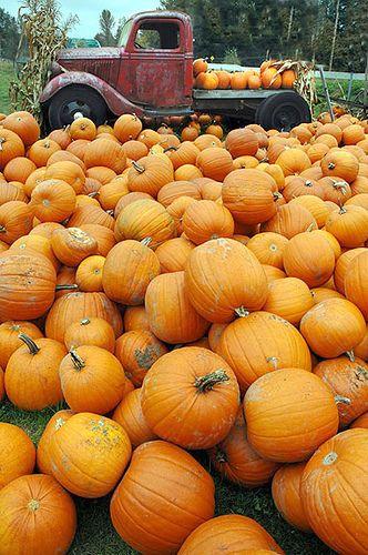 Orange You Glad It's Pumpkin Season? – Everyday Living