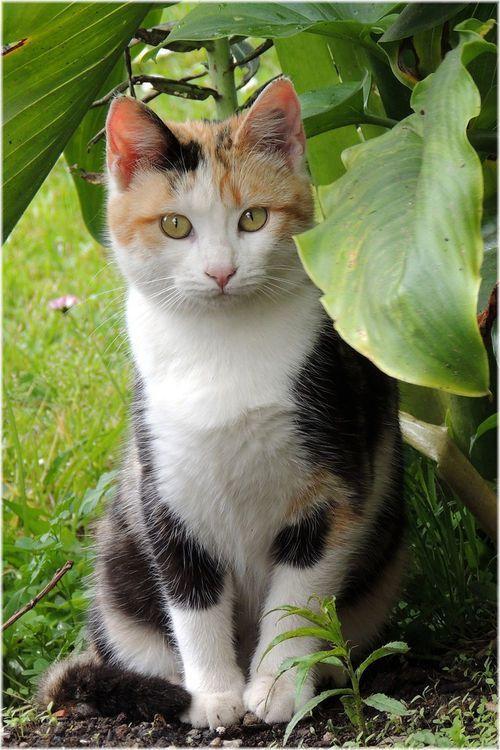 Pretty Calico Cat Sitting in the Shade. | Calico | Cute ...