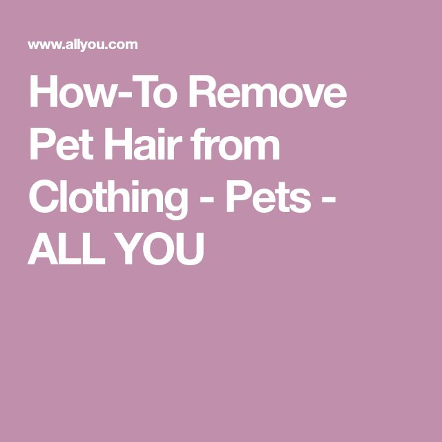 How-To Remove Pet Hair from Clothing - Pets - ALL YOU