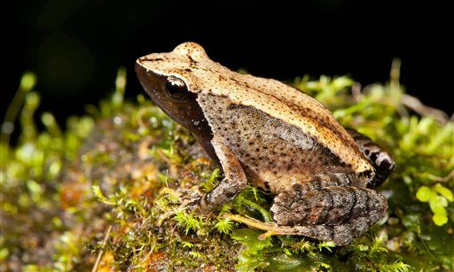 New frog species found in troubled Indian habitat   http://globenews.co.nz/?p=14039
