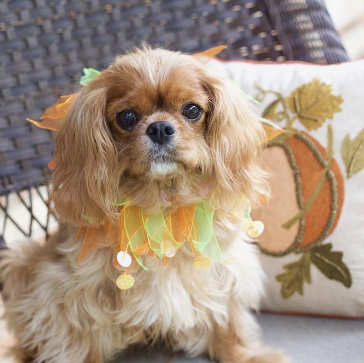 Lucy, Cavalier King Charles Spaniel by Leanne Newman