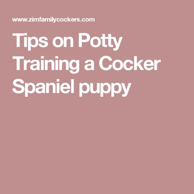 Tips on Potty Training a Cocker Spaniel puppy