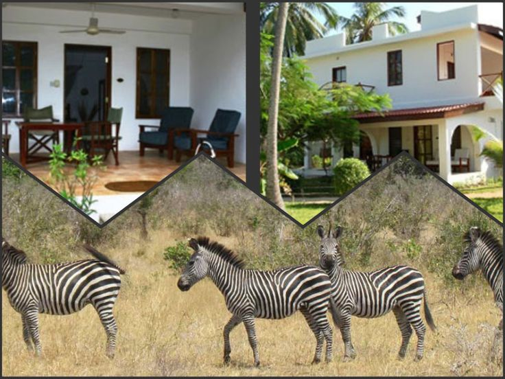 Enjoy exotic Zanzibar Holidays and also get thrilling & lifelong exciting experience by visiting Arusha National Park in Tanzania with Salaam Travel Limited. For information about Tanzania Holiday Packages visit http://www.salaamtours.com.