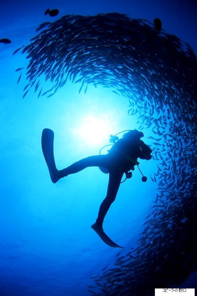 サイパンの海でのダイビングは最高!魚との距離もこんなに近い。サイパン 旅行・観光のおすすめスポット。
