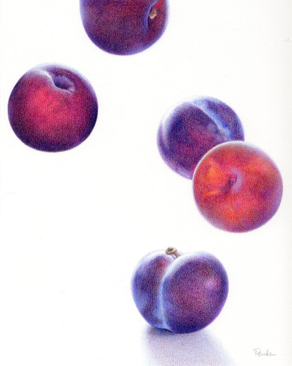 Paula Pertile Art; Plums Up - UnStill Life ORIGINAL Colored Pencil Drawing - Fruit Food Purple Pluot - Realism