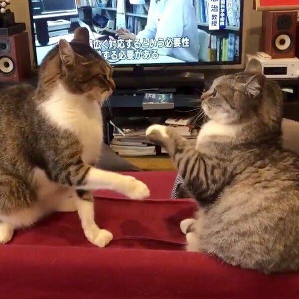 ケンカをする猫たちの間に 平和条約 の制定なるか 気になる結末 ねこのきもちweb Magazine 猫 ねこ 子猫
