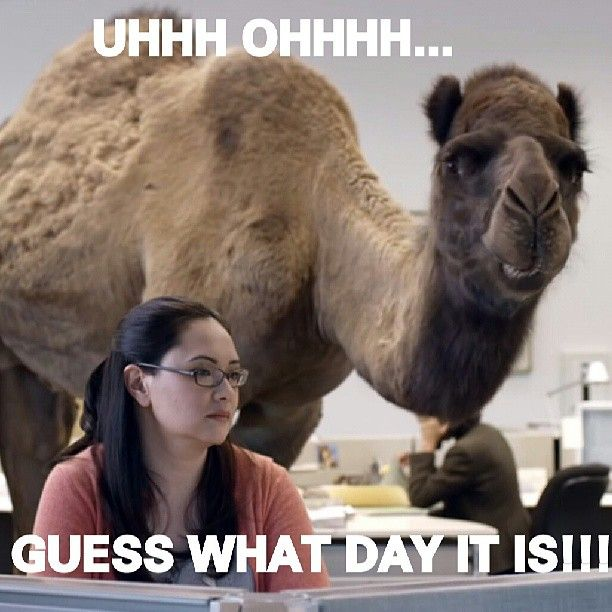 By far one of the funniest hump day commercials we've ever seen.  #humpday #Wednesday