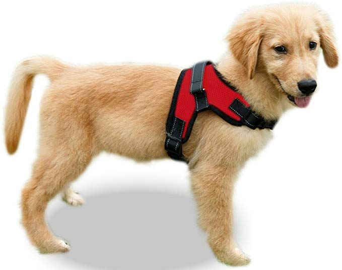 Amazon Com Copatchy No Pull Reflective Adjustable Dog Harness