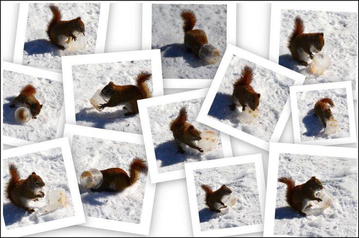 Parole d'écureuil