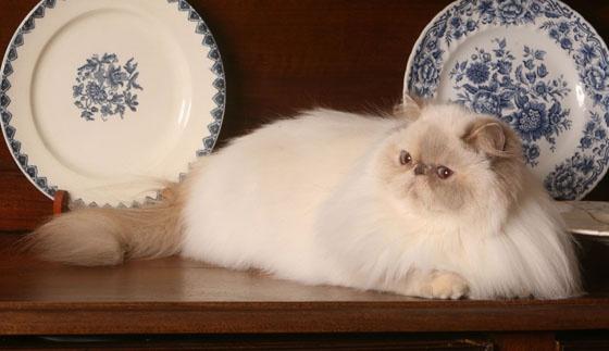 Karmy dla starszych kotów:  http://www.kakadu.pl/Karmy-dla-kotow/karmy-dla-starszych-kotow.html