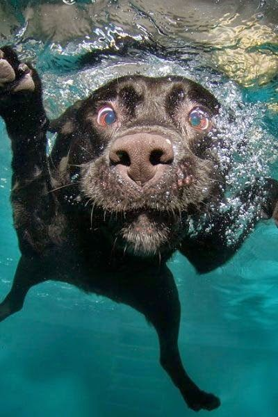10 Most Naughtiest Dogs that Makes you Crazy