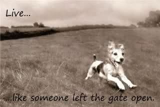:)The Doors, Dogs, Life, Inspiration, Quotes, Things, Living, Gates Open, Animal