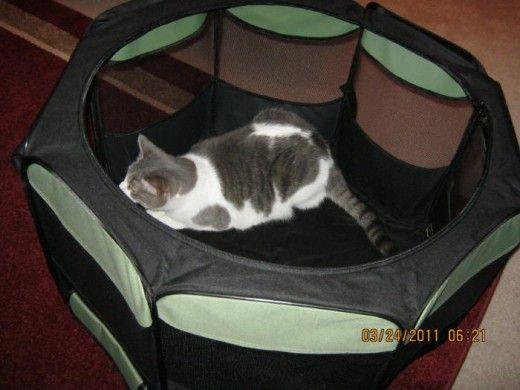 Octagon Cat Pen Review A Great Way to Travel and Move