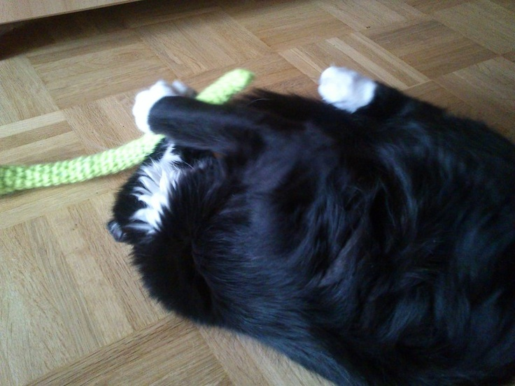 """Unser neues Lieblingsspielzeug für Katzen:    """"gG"""" grüne Giftschlange    Die Schlange wurde gehäkelt und mit Füllwatte ausgestopft, und gewaschen (..."""