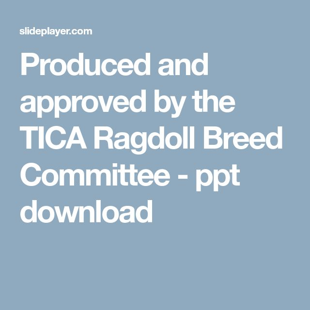 Produced and approved by the TICA Ragdoll Breed Committee - ppt download