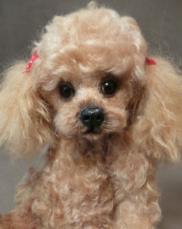 Mill Creek Creations Mohair poodle Palm puppy