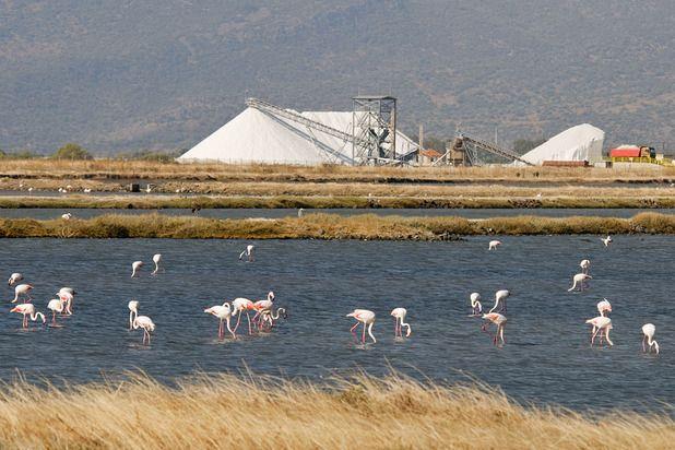 Onverwachte excursies Lesbos | De flamingo's bij de zoutpannen van Kalloni http://lesbos-eiland.webs.com