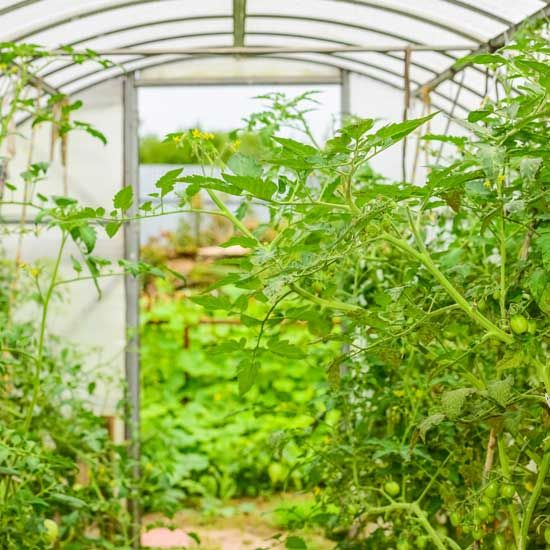 Best 25 Crop Protection Ideas On Pinterest Garden