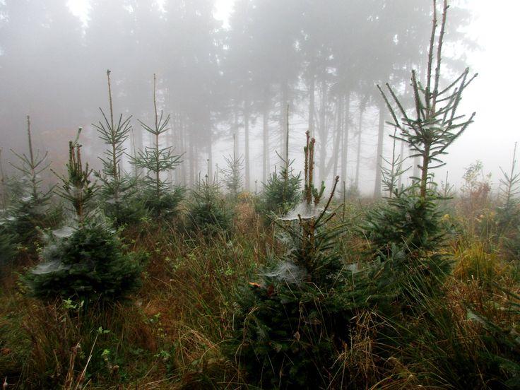 Les u Jedlové