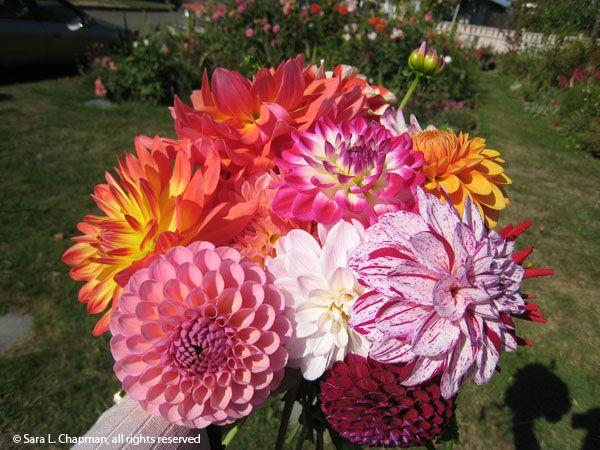 Mariages Rétro: Les bouquets de dahlias