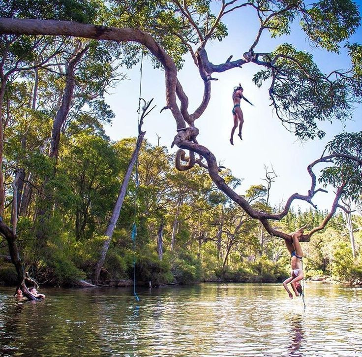 Tree Swing, Margaret River