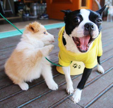 Vtipné momentky zvierat vedia vždy spríjemniť pracovný deň. (foto: Pixabay)