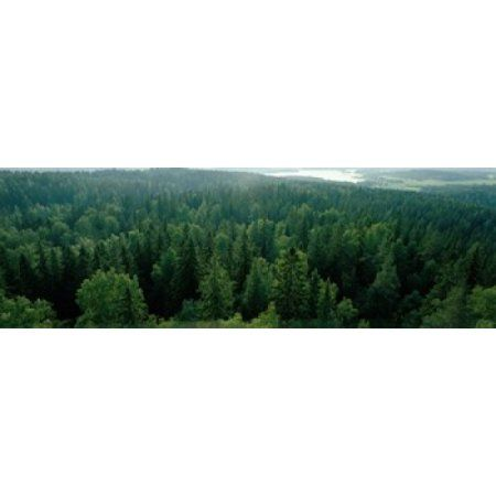 Finland Aulanko Scandinavian Forest Canvas Art - Panoramic Images (36 x 12)