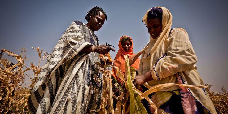 La Corne de l'Afrique – principalement la Somalie, l'Éthiopie et le Kenya – est actuellement frappée par une sécheresse d'une très grande ampleur due à des pluies historiquement basses et à des températures élevées.