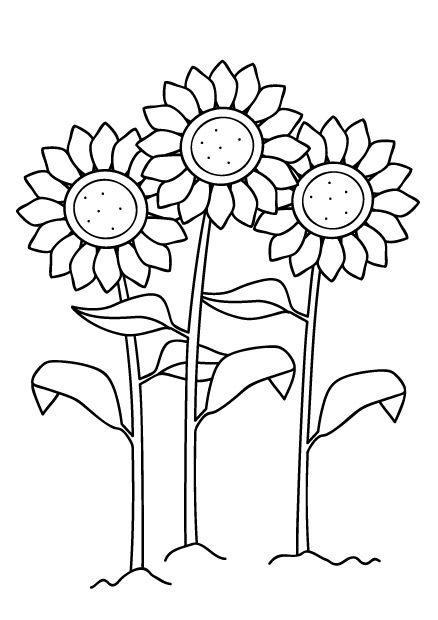 Coloriage de tournesol coloriage de fleurs imprimer pour arthur ou lily pinterest - Coloriage tournesol ...