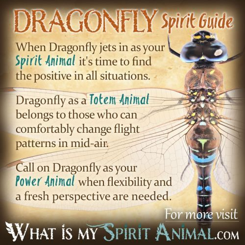 Dragonfly Symbolism & Meaning