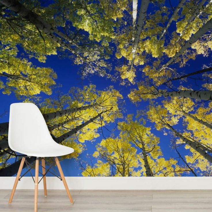aerial-aspens-forest-square-wall-murals