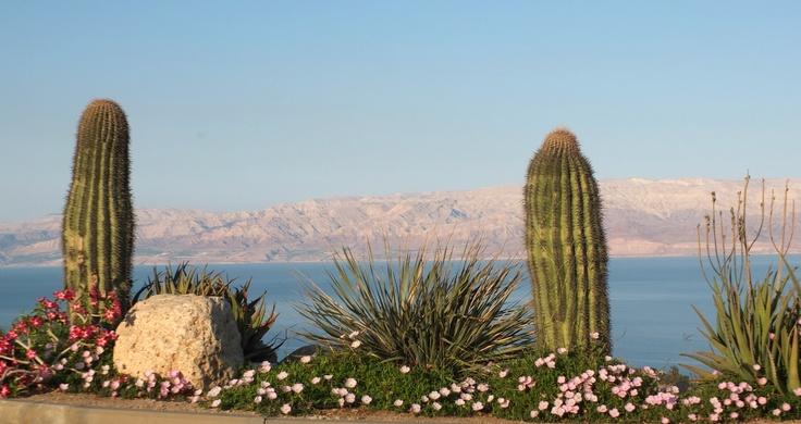 """Ausblick vom Kibbutz Ein Gedi Hotel auf das Tote Meer.  Was kann schöner sein als am """"Schabbes"""" im botanischen Garten des Kibbutz Ein Gedi die Seele baumeln zu lassen?"""