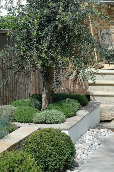 MEDITERANEAN FEEL GARDEN. Love the white render, stone & pebbles, very clean looking!