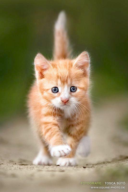 Beautiful cute kitten wallpaper for