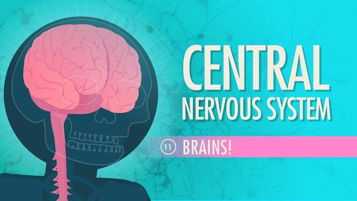 Central Nervous System: A&P #11                                                                                                                                                                                 More