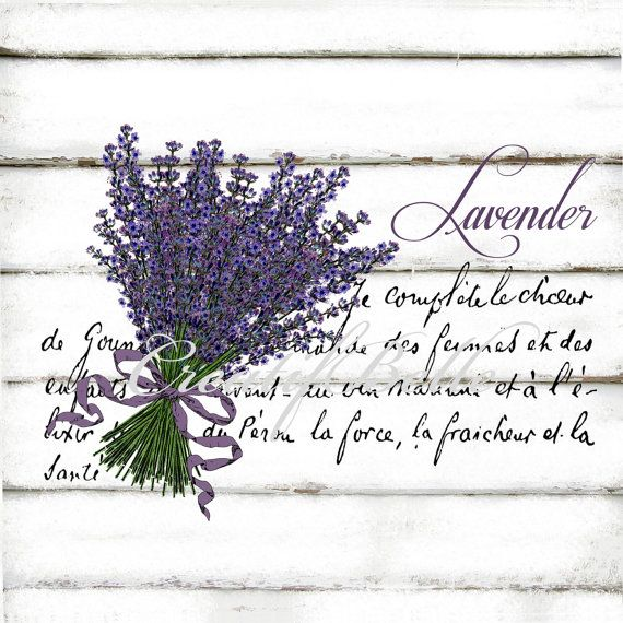 Vintage Lavender Large A4 Instant Digital Download Printable Graphic Transfer Image Botanical Herbs Decoupage Shabby Chic Supplies